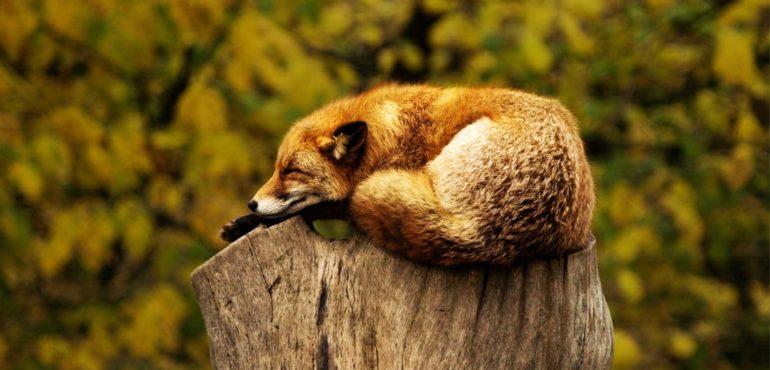 Silenzio e riposo: due beni preziosi per il benessere della nostra mente