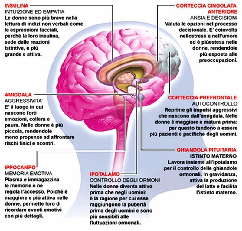 amigdala - GLI EFFETTI DELLA PREOCCUPAZIONE SUL CORPO E SUL CERVELLO